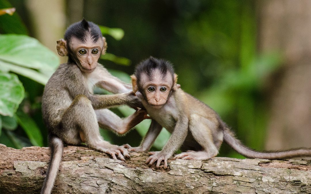 Scientists Successfully Clone Monkeys, Vatican Speaks Out