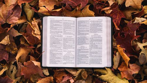 bible surrounded by orange, yellow, red, and brown fallen leaves
